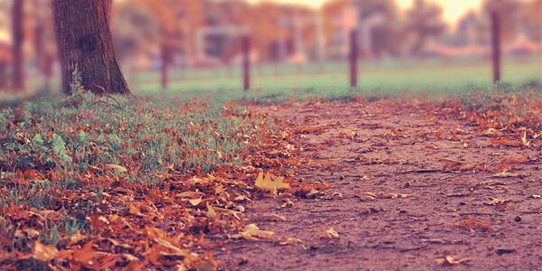 autumn_leaves600x300